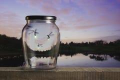 Luciérnagas en la puesta del sol Imágenes de archivo libres de regalías