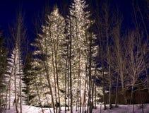 Luci all'aperto 1 di inverno Fotografia Stock