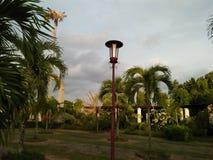 Luci del giardino circondate da bella pianta fotografie stock libere da diritti