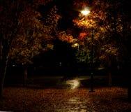 Luci del parco con il percorso bagnato coperto in foglie fotografia stock