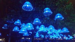 Luci delle meduse immagine stock