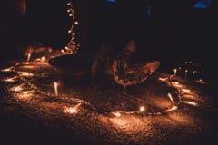 Luci 2 di Natale & del gatto Fotografia Stock Libera da Diritti