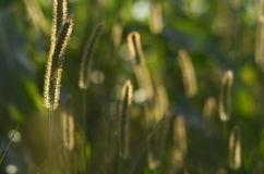 Luci ed ombre sull'erba del campo Immagine Stock