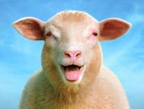 Luci le pecore Fotografia Stock