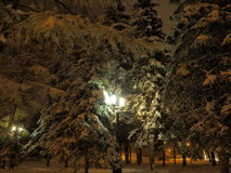 Luci notturne del parco Fotografia Stock Libera da Diritti