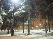 Luci notturne del parco di inverno Immagine Stock Libera da Diritti