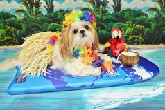 Luci tropical Imagem de Stock