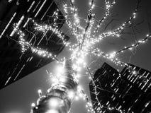 Luci urbane dell'albero alla notte - B&W immagine stock