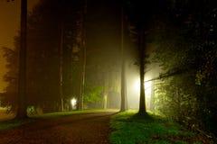 Lucidare chiaro intenso attraverso gli alberi immagine stock