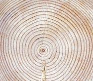 Lucidatura del legno Immagine Stock