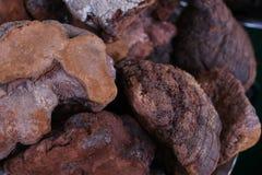 Lucidum ganoderma гриба Lingzhi cutdry Стоковые Фото