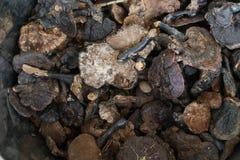 Lucidum ganoderma гриба Lingzhi cutdry Стоковое фото RF