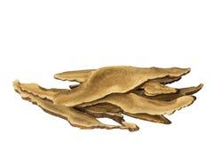 Lucidum Ganoderma Стоковое Изображение