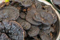 Lucidum ganoderma Lingzhi отрезанное грибом сухое Стоковое Фото