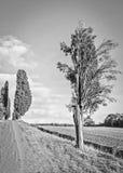 Lucignano en Toscane Photo libre de droits