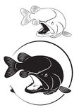 Lucio de los pescados Imagenes de archivo