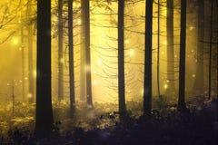 Luciole abstraite d'imagination dans la forêt brumeuse photos stock