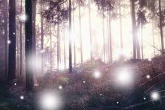 Luciole abstraite dans la forêt brumeuse magique images libres de droits