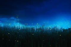 Luciole sur un champ d'herbe la nuit photographie stock