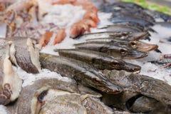 Lucios y otros pescados en la exhibición del mercado Imágenes de archivo libres de regalías