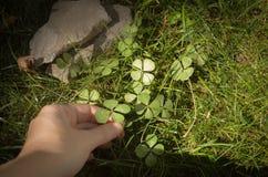 Luck clover stock photos