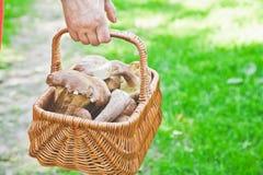 Luck mushroom picker. Basket with white porcini mushrooms. Stock Photo