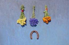 Luck symbol  rusty horseshoe and medical herb flower  bunch on blue wall Royalty Free Stock Photos