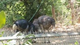 Lucknow zoo royaltyfri fotografi