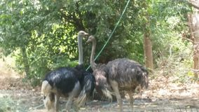 Lucknow zoo royaltyfri foto