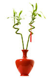 Lucky bamboo. Two stalks of lucky bamboo in a red vase isolated on white background Stock Photo