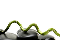 Lucky bamboo. Pebble with Lucky bamboo stick Royalty Free Stock Photo