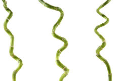 Lucky bamboo. Three lucky bamboo stems on white background Royalty Free Stock Photos