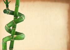 Lucky bamboo background Royalty Free Stock Images