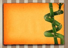 Lucky bamboo background Royalty Free Stock Photo