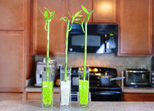 Lucky bamboo plants in the kitchen Stock Photo