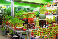Lucky Bamboo Stand at the flower market Stock Photos