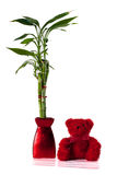 Lucky bamboo and teddy bear Stock Photography