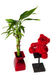 Lucky bamboo and teddy bear. Red bear alongside a lucky bamboo plant and red vase royalty free stock images