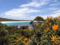 Lucky bay. Beach at Cape Le Grand National Park Australia Royalty Free Stock Photography