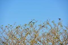 Lucky Birds sur des branches d'arbre Photographie stock libre de droits
