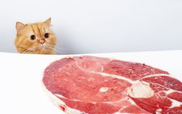Lucky cat. Cat reach the meat and ready to feast royalty free stock photo