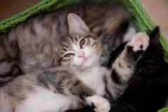 Lucky cats. Kitten four months Stock Photo