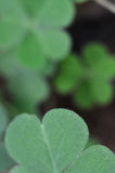 Lucky Charm Stock Photography