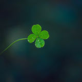 Lucky clover Stock Photos