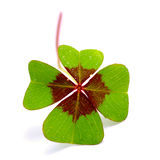 Lucky clover Royalty Free Stock Images