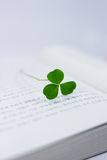 Lucky clover Stock Photography