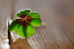 Lucky clover Stock Images
