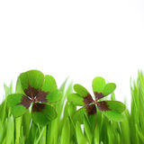 Lucky clover Stock Image