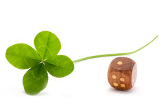 Lucky clover and die. Four leaves clover and wooden die on white background stock image