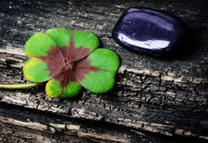 Lucky clover and stone on wood Stock Image